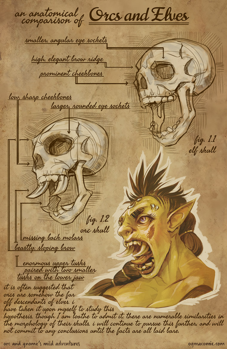 An Anatomical Comparison of Orcs and Elves